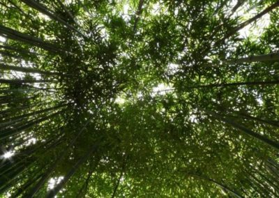 03-wikihostel.it-outdoor-bamboos-forrest2